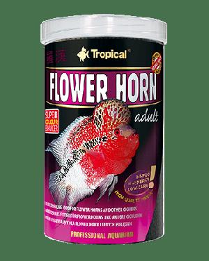 Flower horn adult