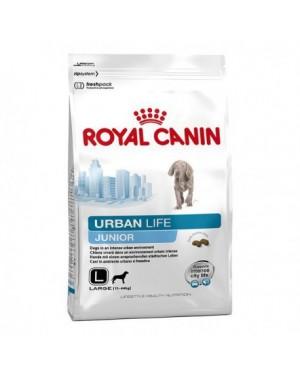 RC Urban Life Junior Large Dog