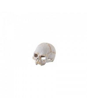 EXO TERRA Dino primate nano refugio fósil