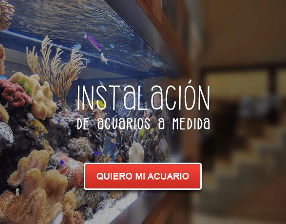 Instalacion de acuarios