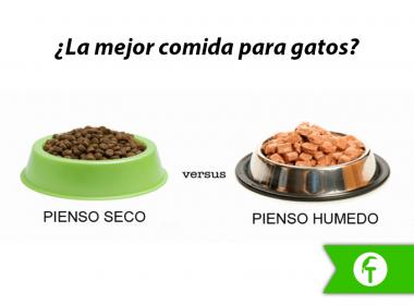 La mejor comida para gatos: Seca vs. Húmeda
