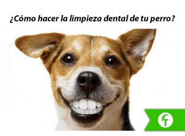 ¿Cómo hacer la limpieza dental de tu perro?