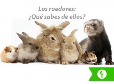 Los roedores. ¿Qué sabes de ellos?