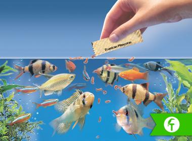La alimentación de los peces