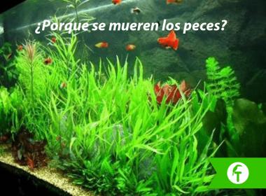 Porque se mueren los peces
