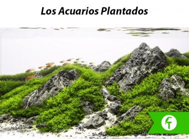 Los acuarios plantados