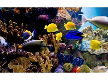 Los nutrientes necesarios en la alimentación de los peces