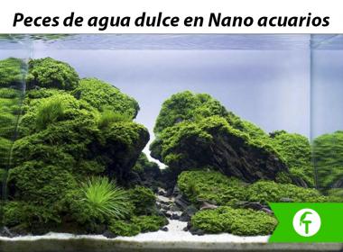 Peces de agua dulce para nanoacuarios