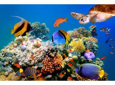 Tipos de comida seca para peces
