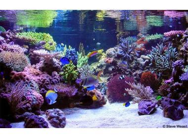 La acuariofilia. ¿Ciencia o afición?