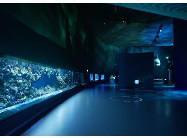 Los acuarios más grandes del mundo