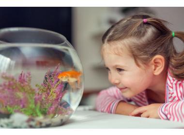 10 beneficios de tener peces como animales domésticos