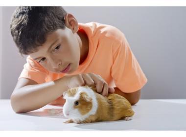 Cobaya la mascota para niños