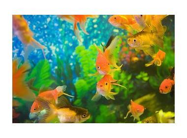 Cuantos peces poner en mi primer acuario