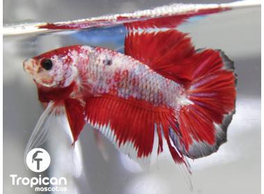 Cuanto vive un pez en un acuario