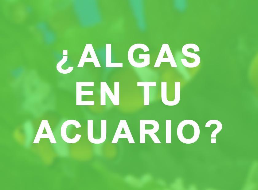 Plantas de acuario para evitar algas