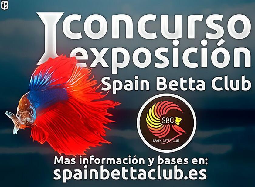 I Concurso de exposición peces bettas.