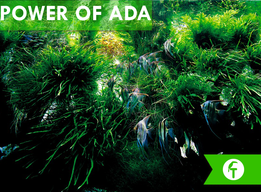 The Power of ADA: Filosofía de ADA