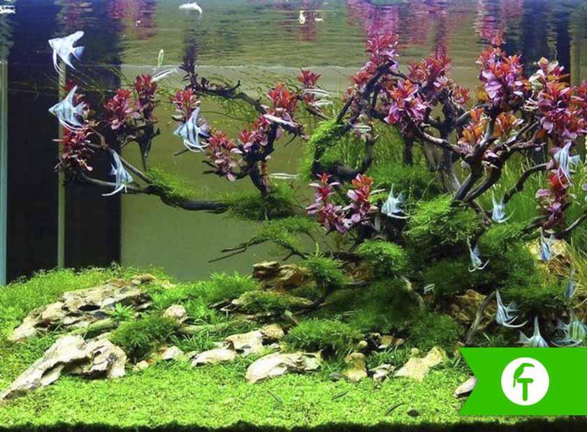 ¿Te atreves a montar tu propio acuario natural?