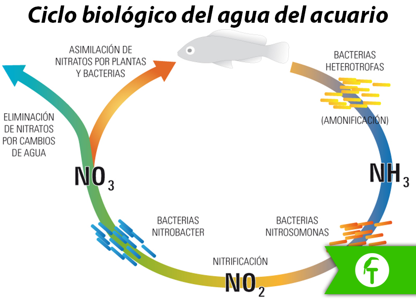 Ciclo biológico del agua del acuario
