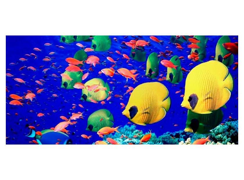 Las enfermedades de peces tropicales más comunes