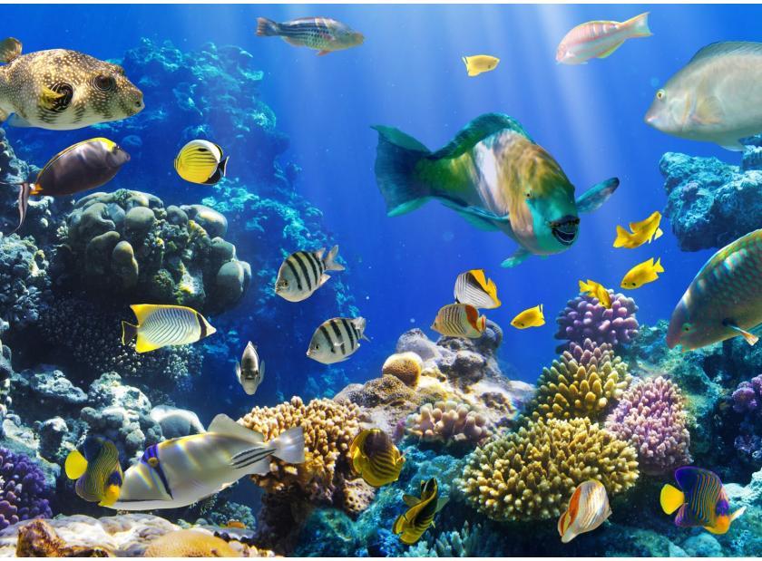 Blog diferencias entre peces de agua dulce y salada for Variedad de peces
