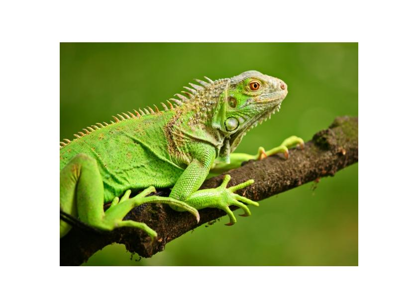 Tienda de reptiles Tropican Mascotas