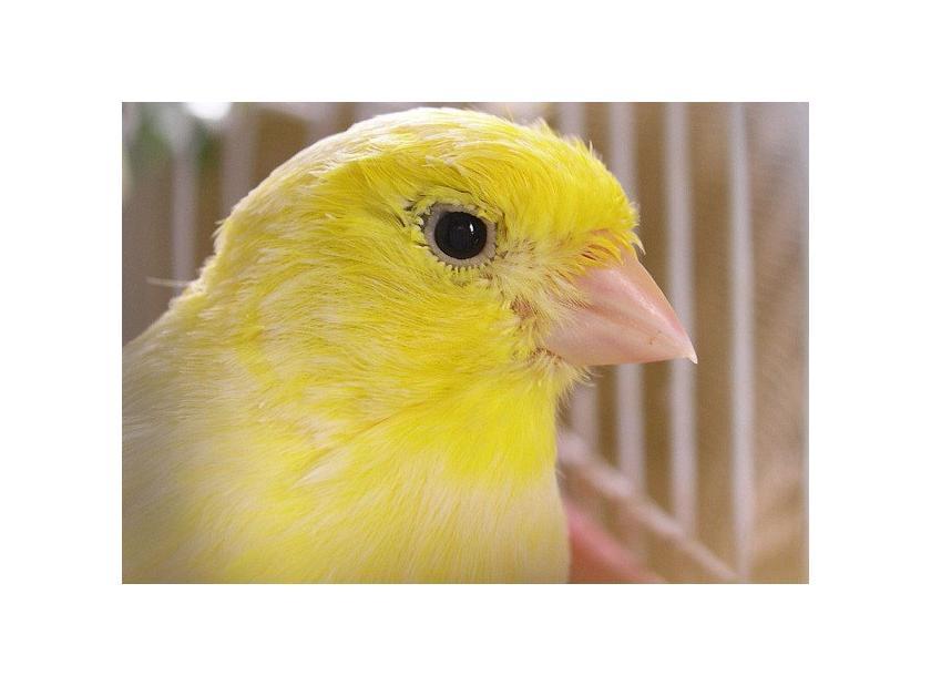 Vitaminas para pájaros