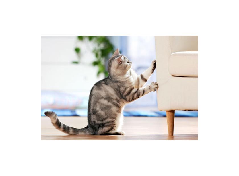 3 motivos por los que tus gatos arañan muebles