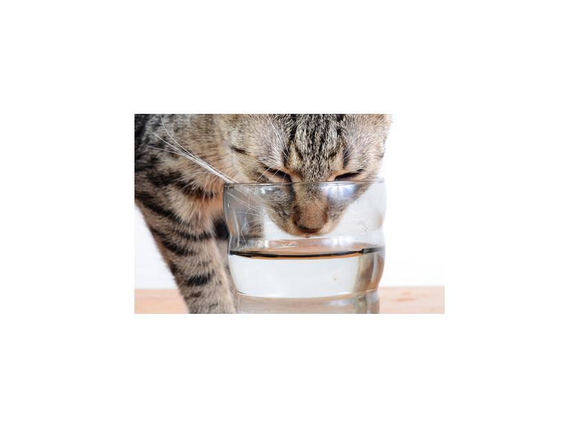 Cuidados del gato en épocas muy calurosas
