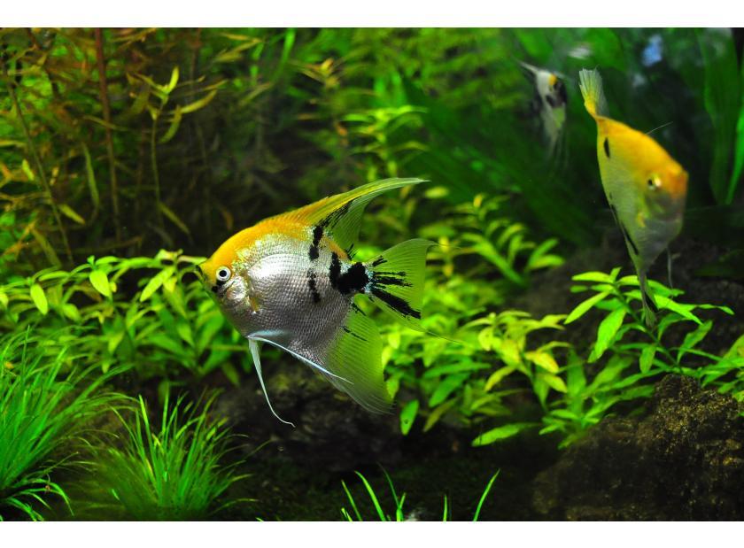 Mantenimiento y puesta en marcha de un acuario