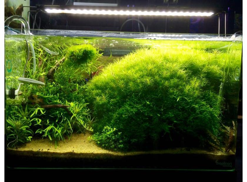 Plantas acuáticas para acuarios de todos los tamaños