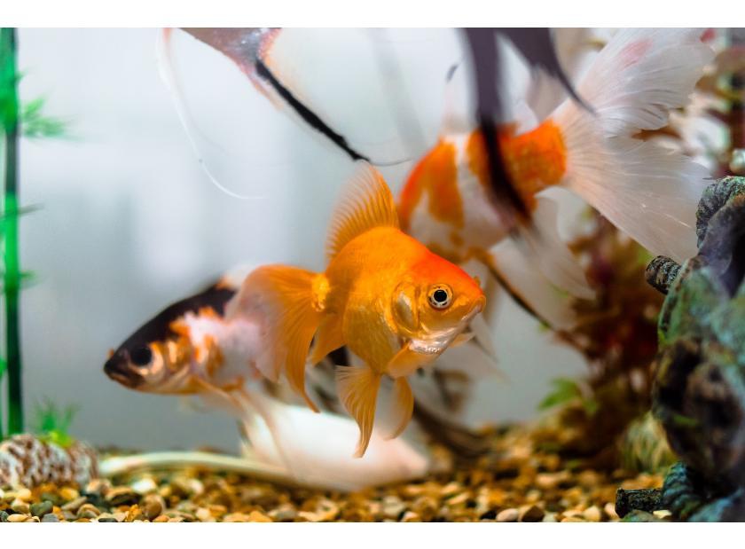 Guía practica para elegir, alimentar y cuidar a tus peces