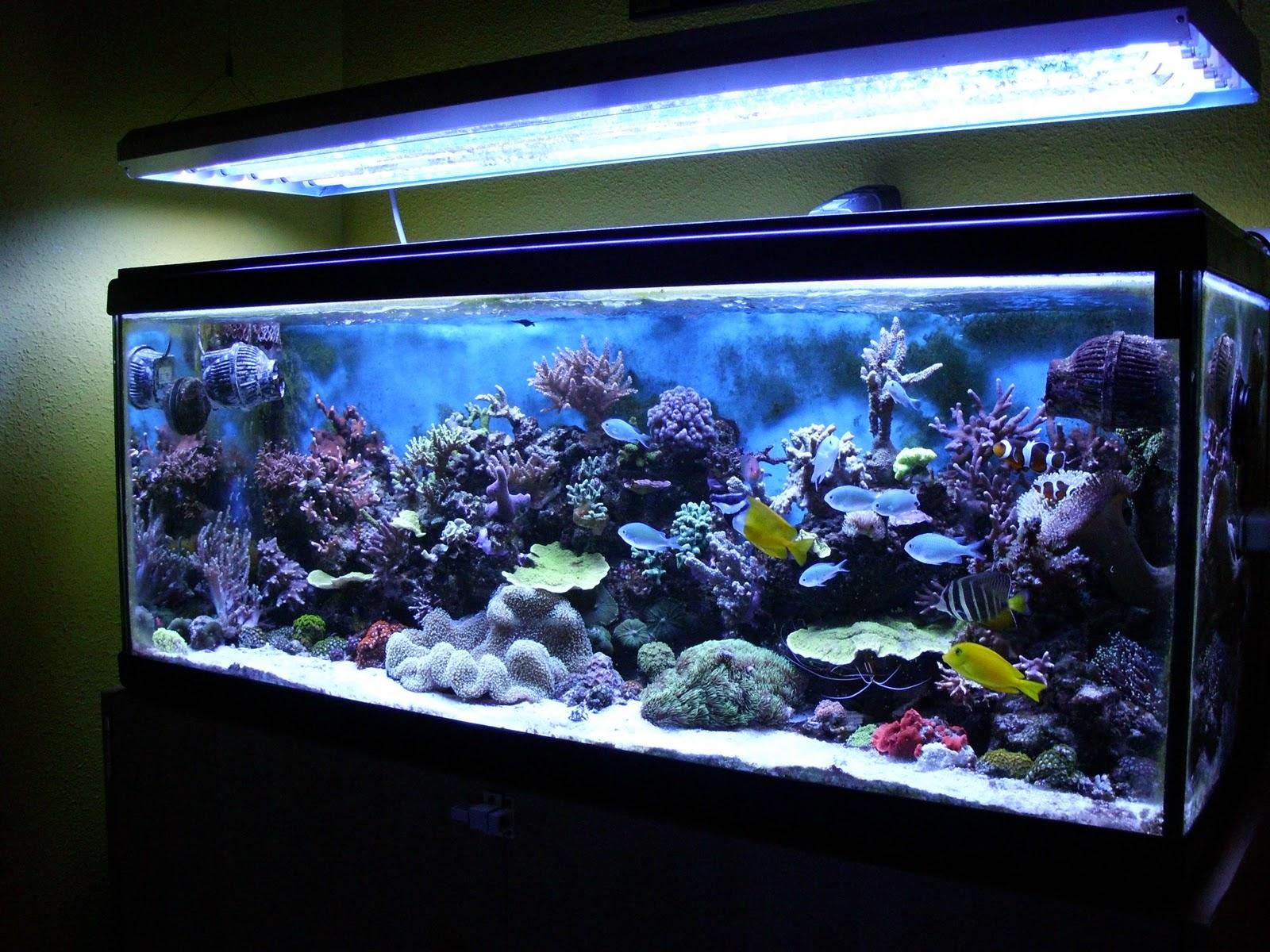 Blog diferencias entre peces de agua dulce y salada for Peces de agua dulce para peceras