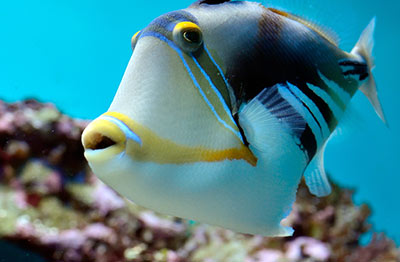 blog las enfermedades de peces tropicales m s comunes