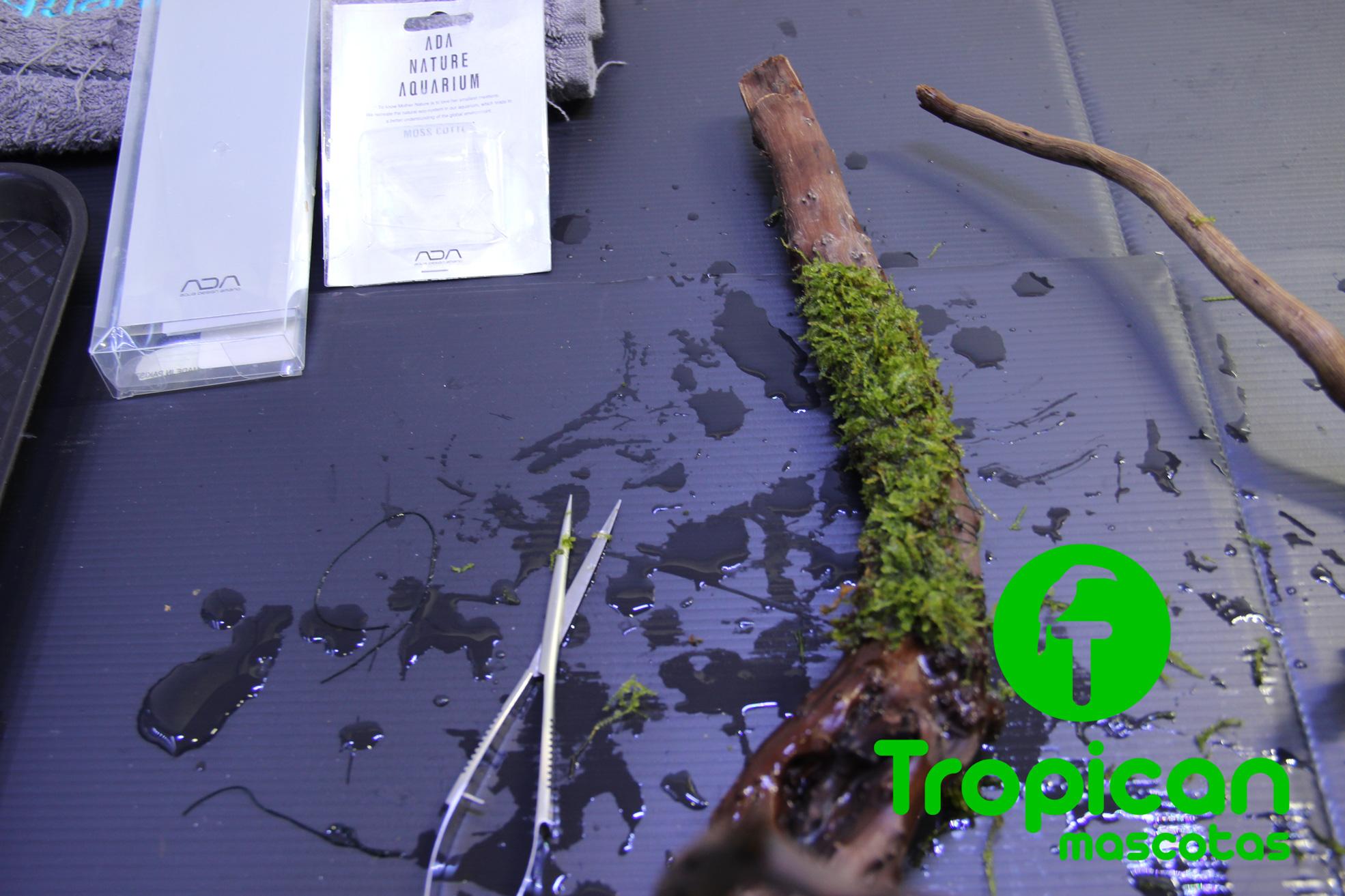 atar musgo a troncos ejemplo