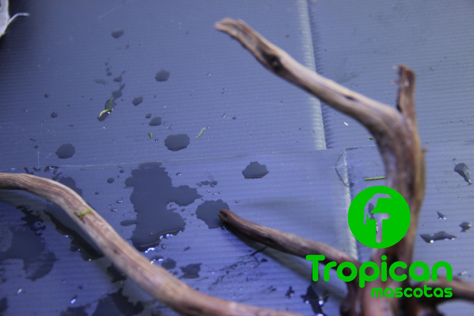 atar musgo a troncos