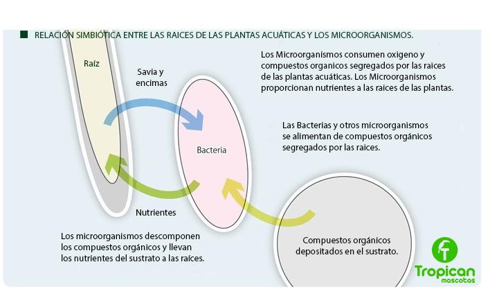 relacion nutrientes acuario plantado