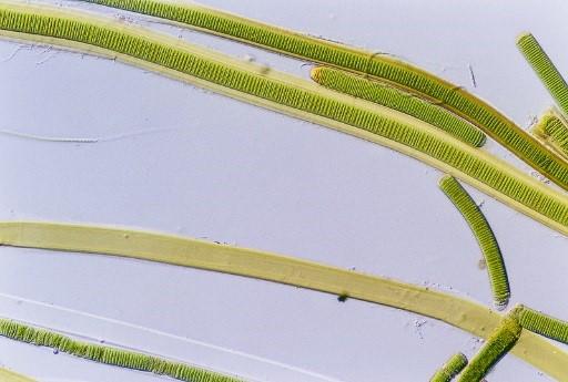 Algas en los acuarios