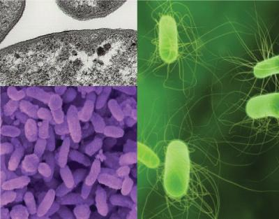 twinstar bacterias