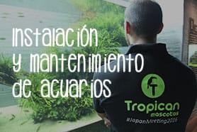 Instalación y mantenimiento de acuarios a domicilio Tropican Mascotas